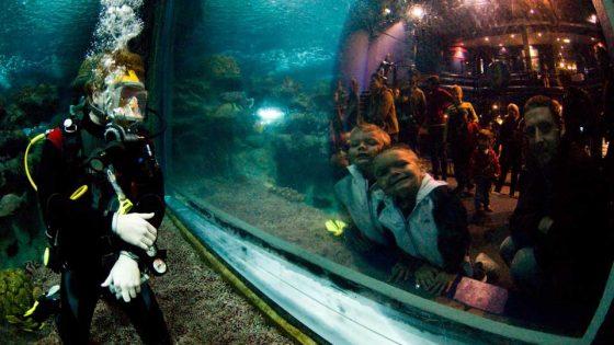 School-Trip-Blue-Planet-Aquarium
